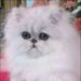 Bonnie - reviewer of Freedom Pet Pass pet doors
