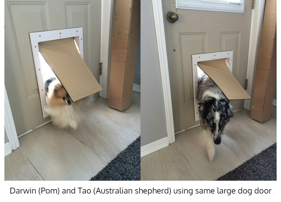 Pomeranian and Australian Shepherd using Freedom Pet Pass energy-efficient insulated large dog door