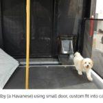Havanese using small dog door - Freedom Pet Pass energy-efficient insulated pet doors