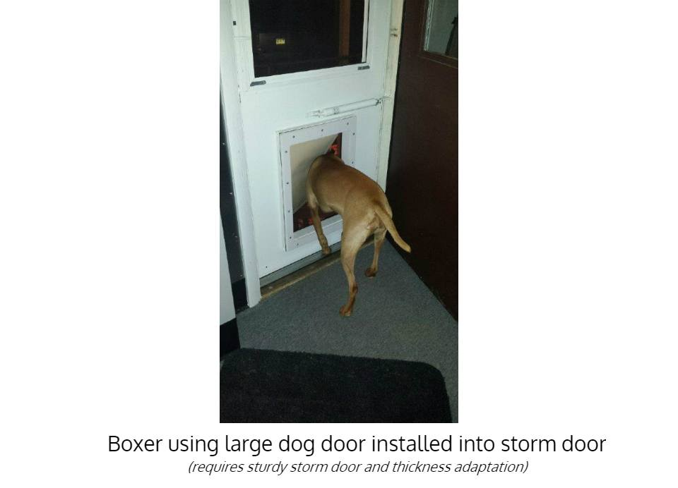 Boxer using large insulated dog door - Freedom Pet Pass