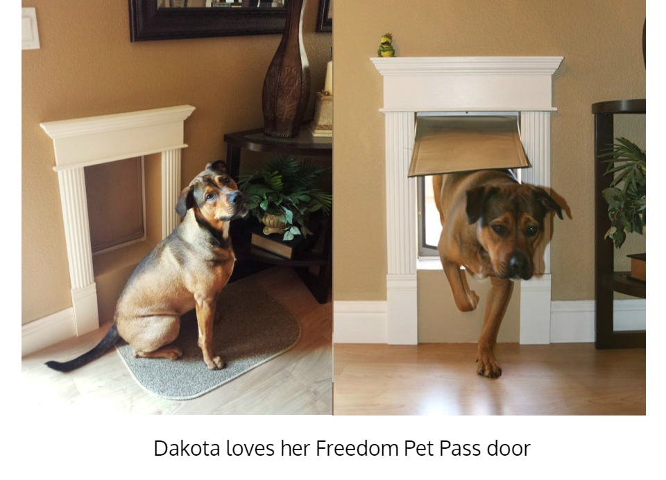 Dakota using large dog door for walls - Freedom Pet Pass