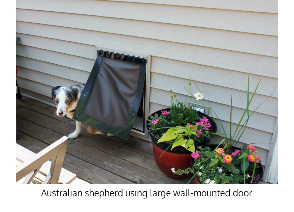 Australian shepherd using Freedom Pet Pass energy-efficient dog door for walls